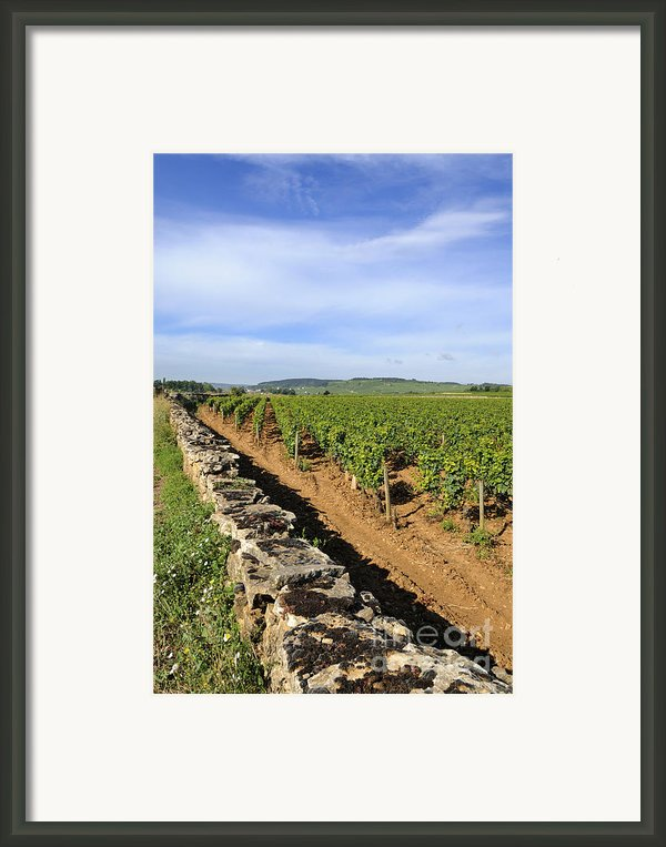 Stone Wall. Vineyard. Cote De Beaune. Burgundy. France. Europe Framed Print By Bernard Jaubert