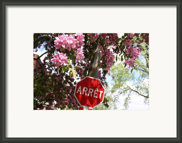 Stop To Smell The Flowers Framed Print By Frederico Borges