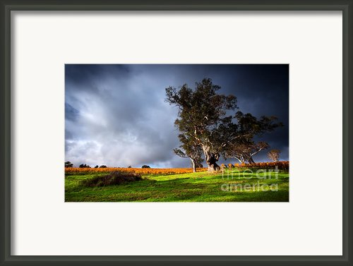 Storm Onto A Vineyard Framed Print By Boon Mee