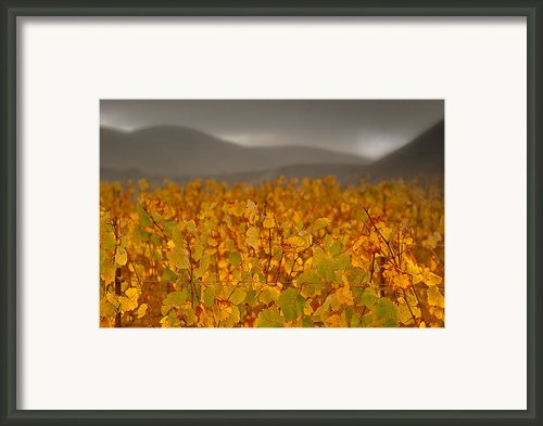 Storm Over Vinyard - Landscape Photos Framed Print By Laria Saunders