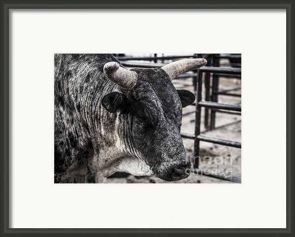 Strategizing Framed Print By Amber Kresge