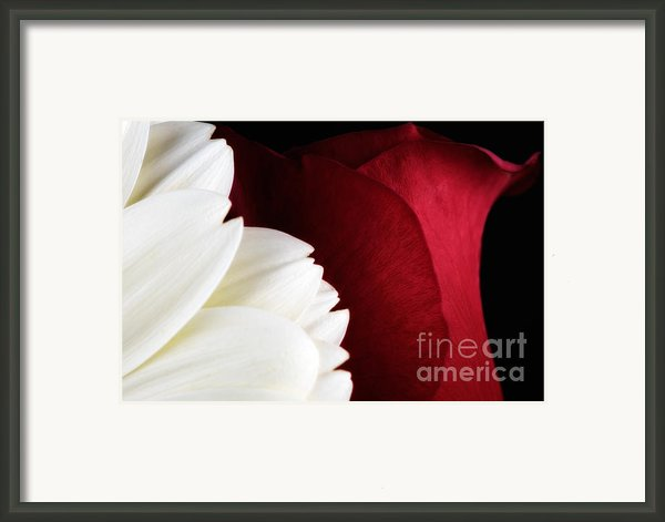 Strawberry And Cream Framed Print By Mark Johnson