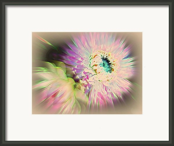 Strawflower Awakening Framed Print By Shirley Sirois