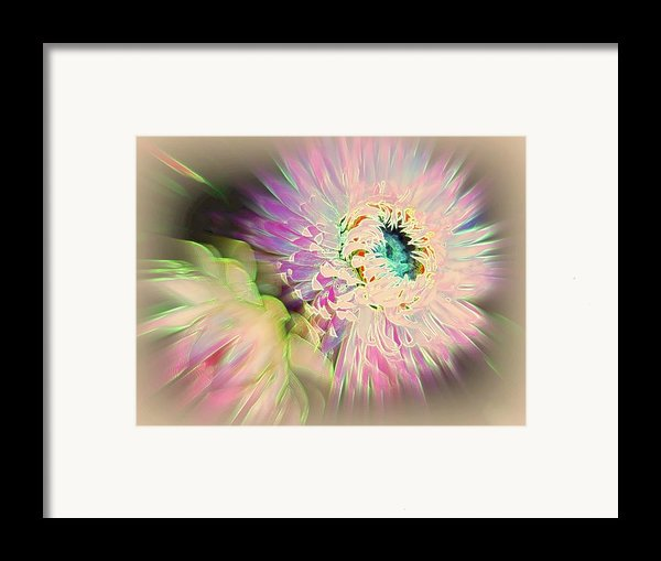 Strawflower Awakening Framed Print By Shirley Sirois