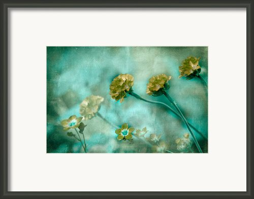 Stretching Toward Morning Framed Print By Bonnie Bruno