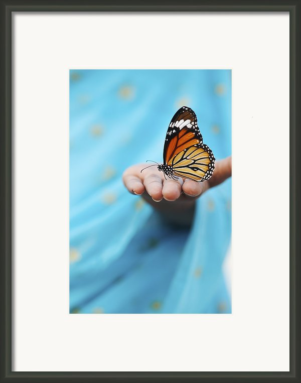 Striped Tiger Butterfly Framed Print By Tim Gainey
