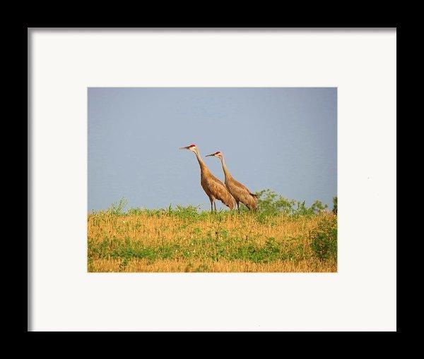 Strolling Sandhills Framed Print By Feva  Fotos