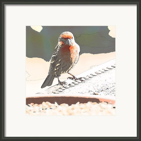 Summer Bird Framed Print By Artist And Photographer Laura Wrede