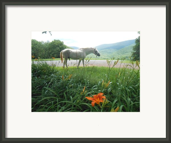 Summer Day Memories With The Paso Fino Stallion Framed Print By Patricia Keller