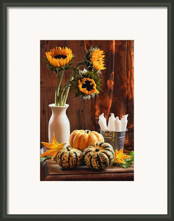 Sunflower And Gourds Still Life Framed Print By Christopher And Amanda Elwell