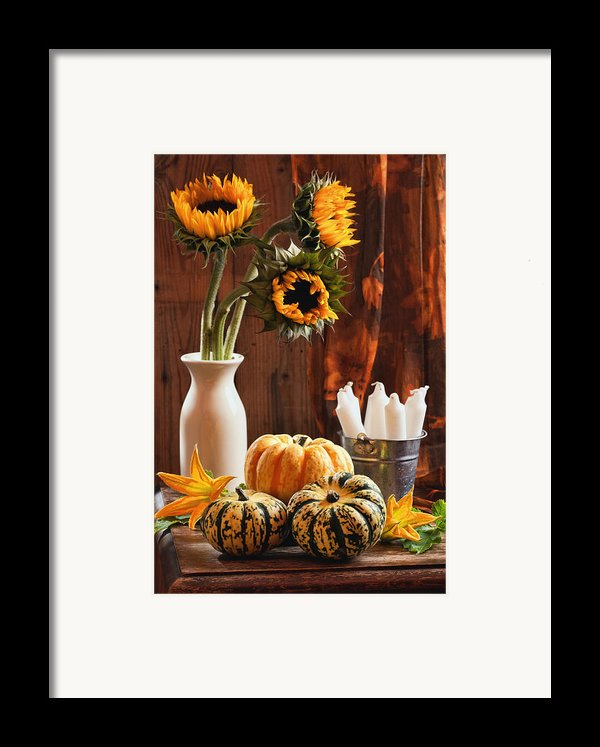 Sunflower And Gourds Still Life Framed Print By Amanda And Christopher Elwell