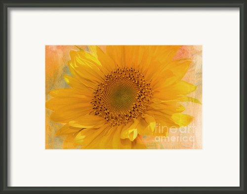 Sunflower Kisses Framed Print By Zeana Romanovna