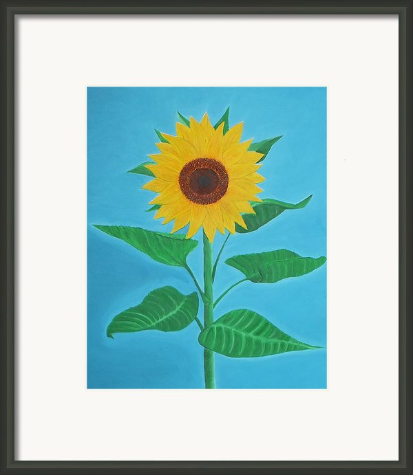 Sunflower Framed Print By Sven Fischer