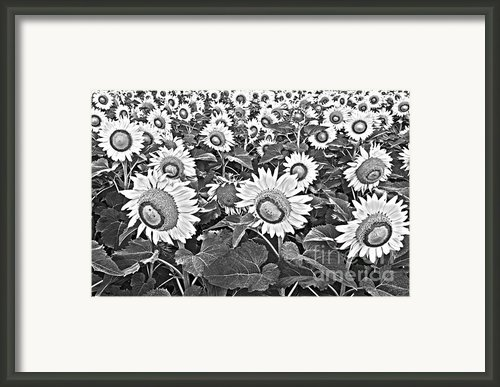 Sunflowers Framed Print By Elena Nosyreva