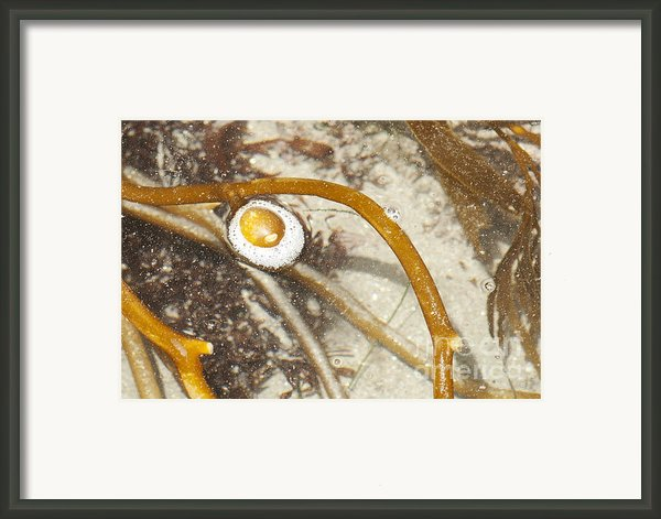 Sunnyside Up Framed Print By Artist And Photographer Laura Wrede