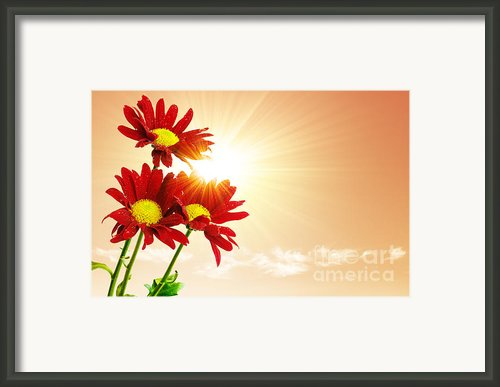 Sunrays Flowers Framed Print By Carlos Caetano