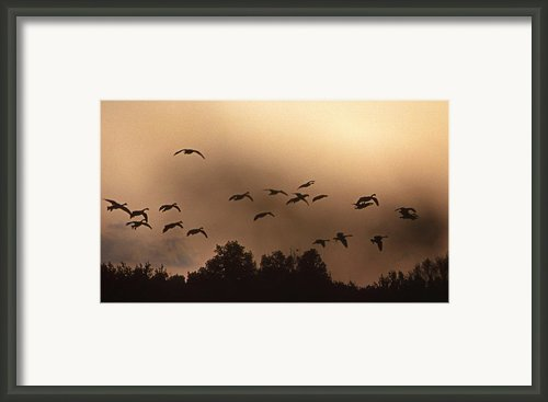 Sunrise Fog And Incoming Framed Print By Skip Willits