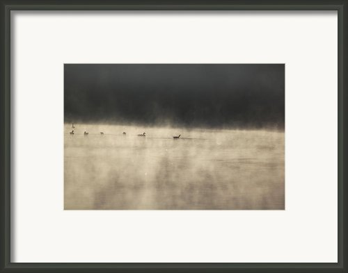 Sunrise Geese Framed Print By Melissa Petrey