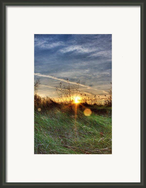 Sunrise Through Grass Framed Print By Tim Buisman