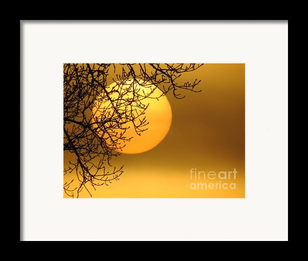 Sunrise Through The Fog Framed Print By David Lankton