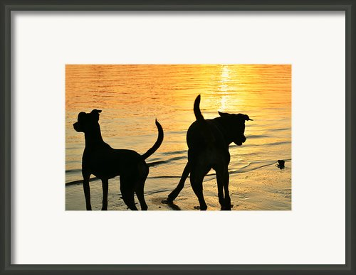 Sunset Dogs  Framed Print By Laura  Fasulo