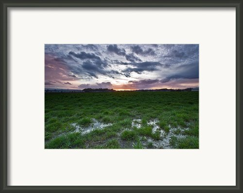Sunset In The Swamp Framed Print By Eti Reid