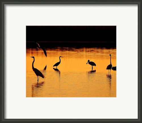 Sunset Silhouette Framed Print By Al Powell Photography Usa