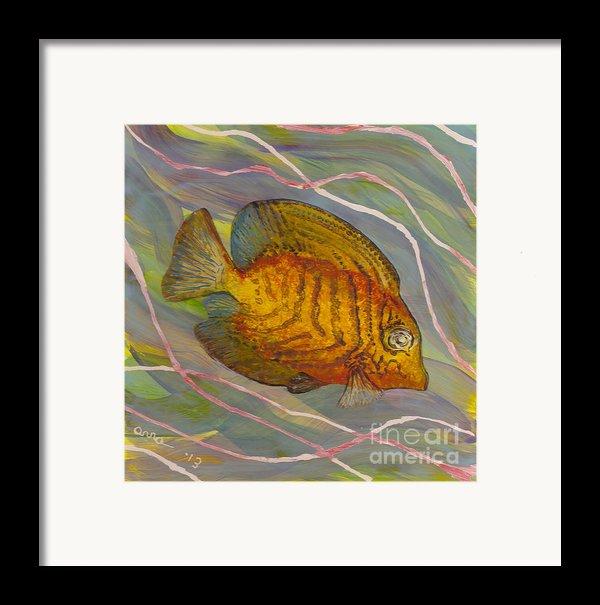 Surgeonfish Framed Print By Anna Skaradzinska