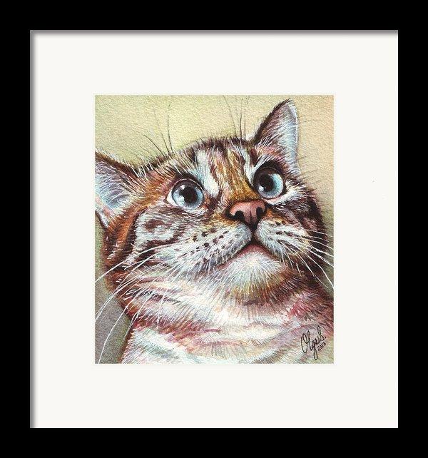 Surprised Kitty Framed Print By Olga Shvartsur