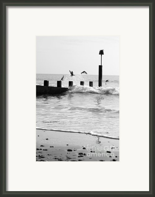 Surprised Seagulls Framed Print By Anne Gilbert