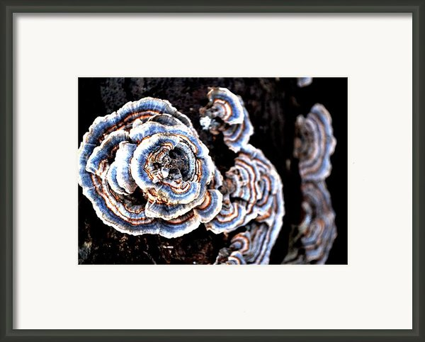Surprising Ii Framed Print By Carlee Ojeda