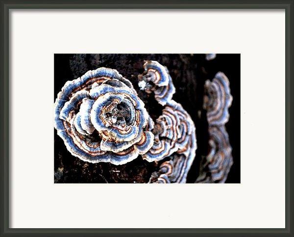 Surprising Ii Framed Print By Carlee Ojeda