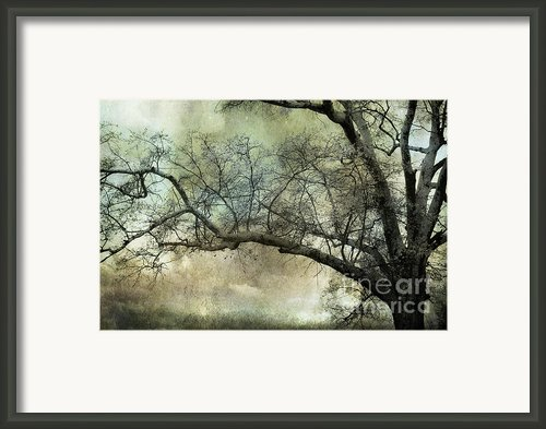 Surreal Gothic Dreamy Trees Nature Landscape Framed Print By Kathy Fornal