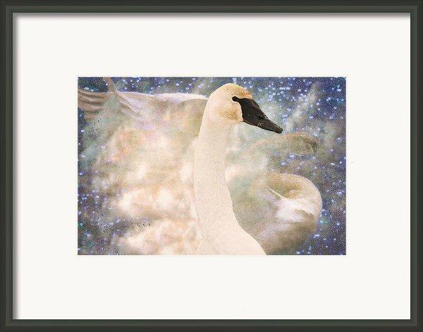 Swan Journey Framed Print By Kathy Bassett