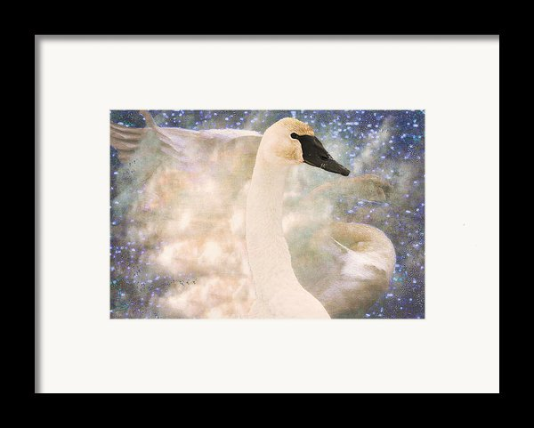 Swan Journey Framed Print By Kathy Bassett