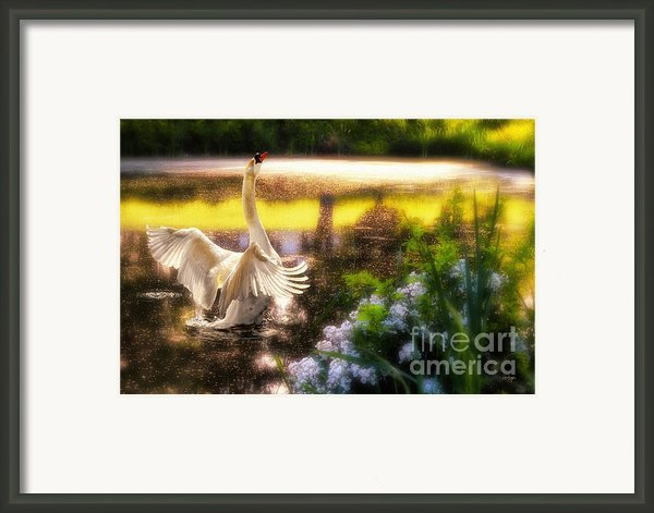 Swan Lake Framed Print By Lois Bryan