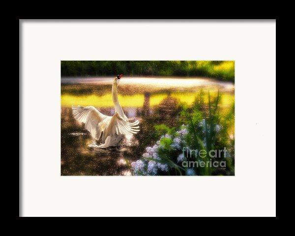 Swan Lake Framed Print By Lois Bryan