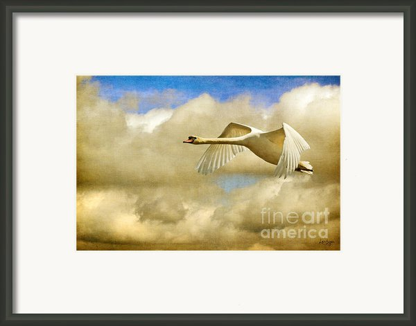 Swan Song Framed Print By Lois Bryan