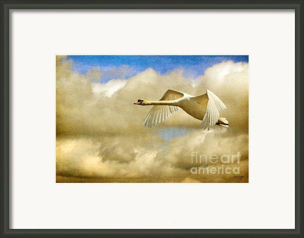 Swan Song Framed Print By Lois Bryan