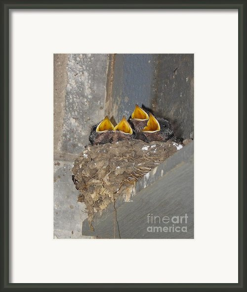 Sweet Adeline My Adeline Framed Print By Robert Frederick