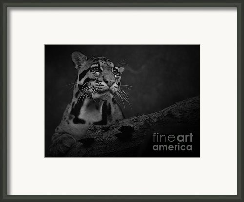 Sweet Clouded Face Framed Print By Adrian Tavano