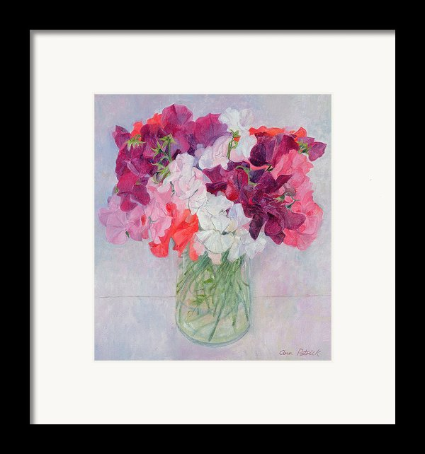 Sweet Peas Framed Print By Ann Patrick