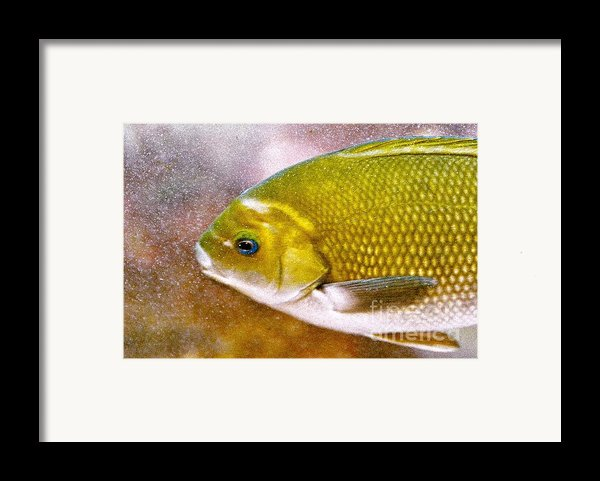 Swimming Fish  Framed Print By Artist And Photographer Laura Wrede