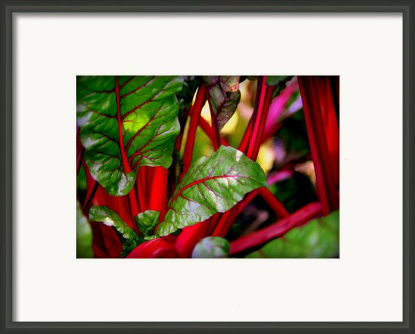 Swiss Chard Forest Framed Print By Karen Wiles