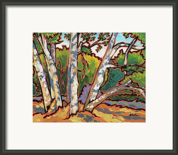Sycamores Framed Print By Nadi Spencer