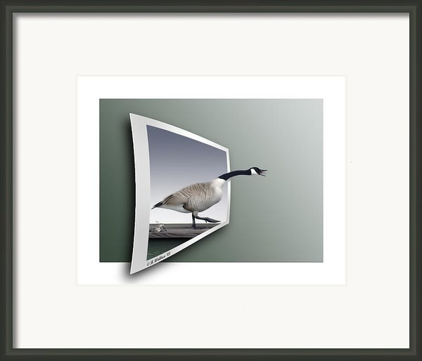 Take A Gander Framed Print By Brian Wallace