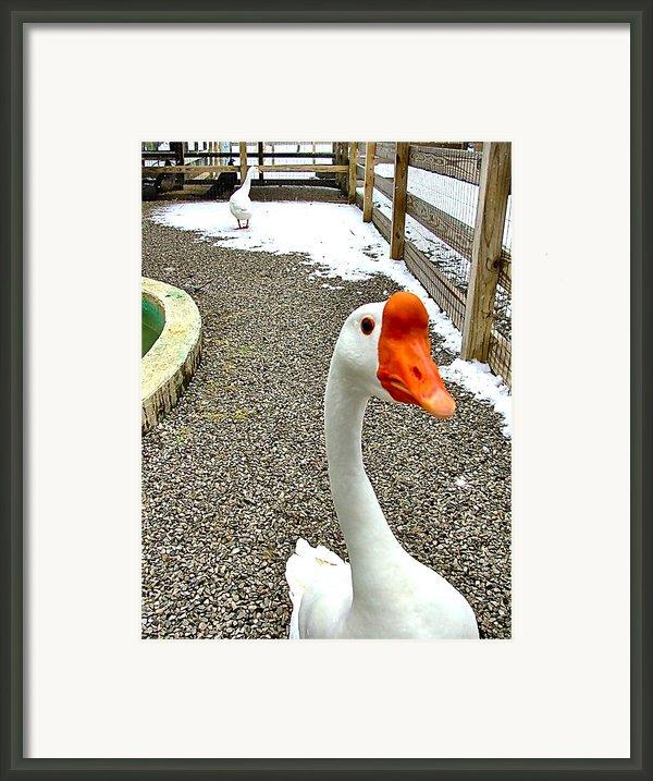 Taking A Gander... Framed Print By Julie Dant