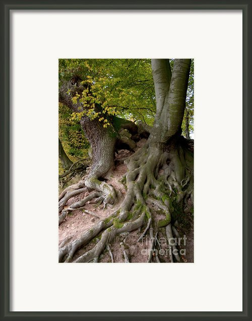 Taking Root Framed Print By Heiko Koehrer-wagner