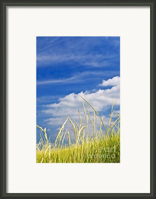 Tall Grass On Sand Dunes Framed Print By Elena Elisseeva