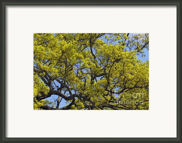 Tangled In Time Framed Print By Pamela Gail Torres